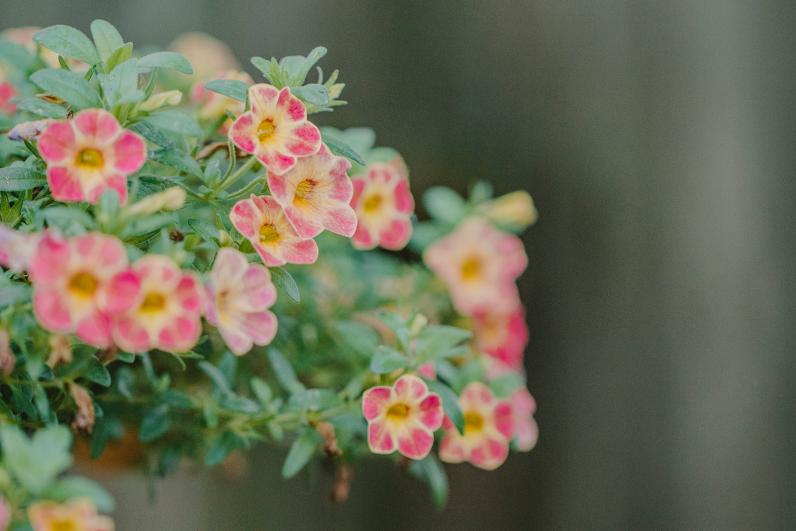 flowers_13 copy