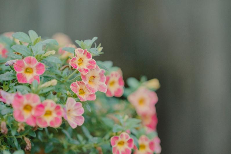 flowers_14 copy