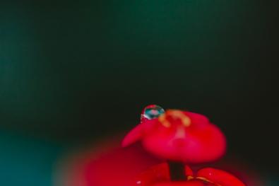 flowers_4 copy