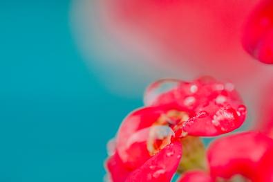 flowers_6 copy