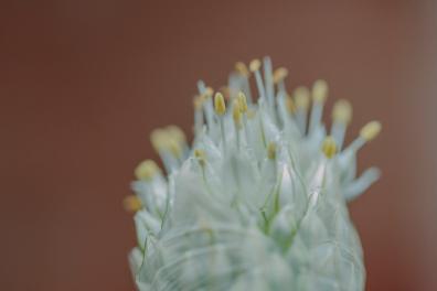 flowers_8 copy
