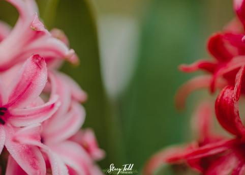 flowers_8