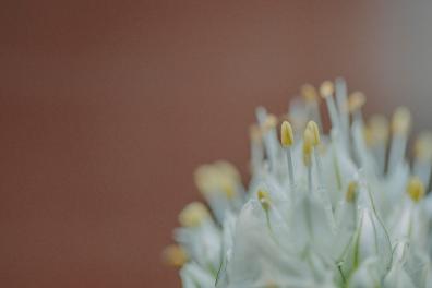 flowers_9 copy